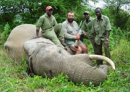 is trophy hunting helping save african elephants