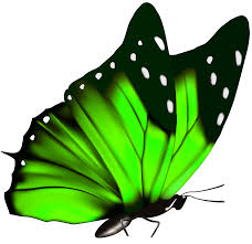 green butterfly png clipart image gallery yopriceville high