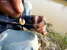 cara membuat umpan mancing ikan mas harian resep umpan mancing ikan mas pakai pelet termurah dan mudah