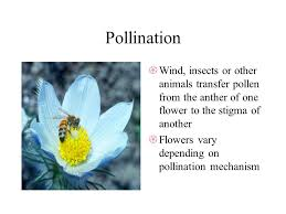 plant reproduction adapted from ppt download