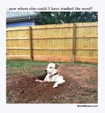 Lost Dog Meme - funny dog in hole looking for lost stash of weed memes