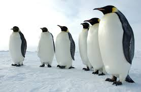 the meaning of the dream in which you saw penguin