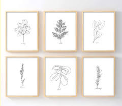 black and white prints for kitchen ink inc herbs botanical prints line drawings minimaist modern kitchen decor black and white home decor set of 6 8x10 matte unframed