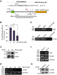 ccn6 regulates mitochondrial function journal of cell science