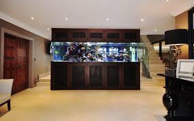stephen ireland freestanding fish tank aquarium architecture