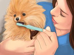 7 ways to take care of a puppy wikihow