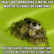 Sad Spider Meme - cccccc combo breaker misunderstood spider know your meme
