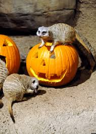 brookfield zoo halloween full of treats for animals photos