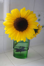 How To Make Roses Live Longer In A Vase Sunny Simple Life Make Cut Sunflowers Last Longer