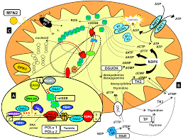 ijms free full text genes and pathways involved in onset