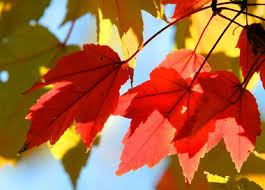 warm weather ohio weaken fall color cleveland
