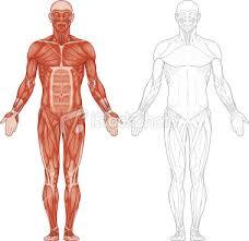 İnsan Vücudundaki Hücre Sayısı