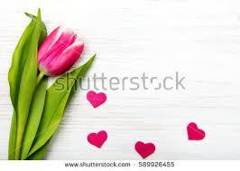Images Of Tulip Flowers - mothers day flowers stock images royalty free images u0026 vectors