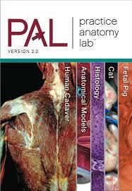 Lab Practical Anatomy And Physiology Heisler Hebert Chinn Krabbenhoft U0026 Malakhova Practice Anatomy
