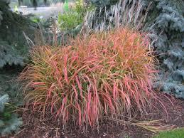 landscapes find the best ornamental grasses for