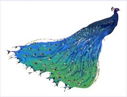 handmade peacock profile notecards boxed note cards made in usa