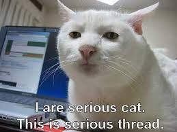 Memes Without Captions - funny cat pictures with captions with guns with quotes without