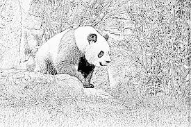 coloriage panda stunning coloriage kung fu panda de la tigresse