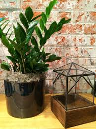 photos hgtv houseplant on table in front of brick wall loversiq
