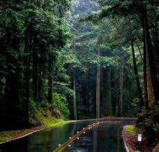 wallpaper tumblr forest forests rain forest tumblr road nature forests free download
