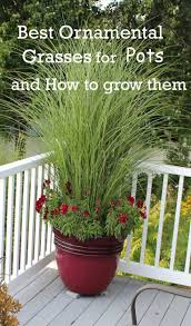 Landscaping Ideas For Backyard Privacy by Best Ornamental Grasses For Containers Gardens Pinterest