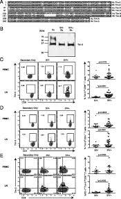expansion of dysfunctional tim 3 u2013expressing effector memory cd8 t