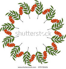 ink drawing rowan rowanberry berries rowan stock vector 671719885