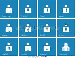 Human Anatomy Integumentary System Integumentary System Body Stock Photos U0026 Integumentary System Body