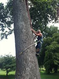 8 best phillips tree service images on trees climbing