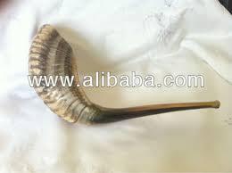 buy shofar shofar shofarot buy shofar shofarot horn ram s horn sheeps horn
