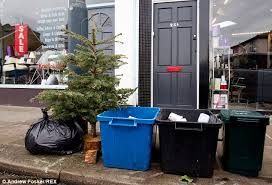 festive season is as britain puts out its trees for