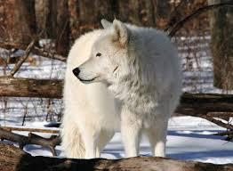 Delaware wildlife tours images Lakota wolf preserve scenic wild delaware river jpg