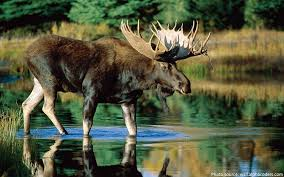 interesting facts about deer just facts