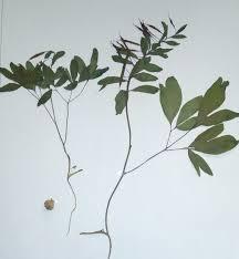 identification identifying multiple plants gardening