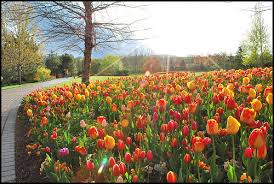 giveaway 2 family 4 pack tickets for the tulip festival utah