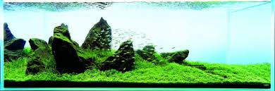 Mountain Aquascape Let S Start With Q Sansui Iwagumi By Amano Aquascaping Wiki