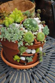 decoration succulent container gardens for sale succulent wall