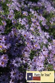 Fall Garden Plants Texas - best 25 texas gardening ideas on pinterest texas gardens ideas