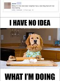 Funny Cooking Memes - cooking dog has know idea what he s doing dump a day