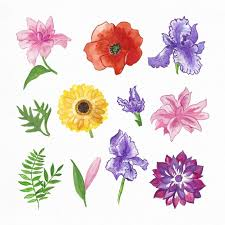 Watercolor Flowers - hand painted watercolor flowers collection vector free download