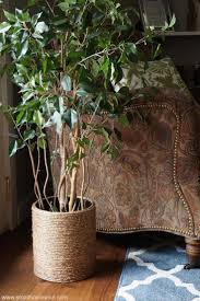 2122 best plants images on pinterest house plants plants and botany
