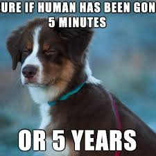 Christmas Dog Meme - not sure dog meme is all out of time