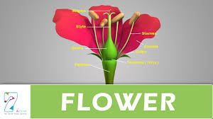 House Structure Parts Names by Flower Structure And Its Parts Youtube