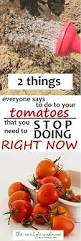 2 things you need to stop doing to your tomatoes right now