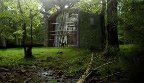 Treehouse Living This Hk 19 Million Eco Friendly Treehouse Collects Water And
