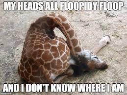 Drunk Giraffe Meme - go home your drunk giraffe memes pinterest drunk giraffe