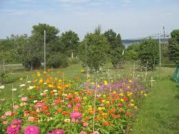 Deer Proof Fence For Vegetable Garden Benners Garden U0027s Testimonials