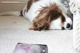 Best Pet Vaccum Furry Friends Review Best Pet Hair Vacuum