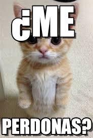 Gato Meme - me gato em p礬 meme on memegen