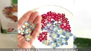 Dry Flowers How To Dry Flowers With Silica Gel Alamould Youtube
